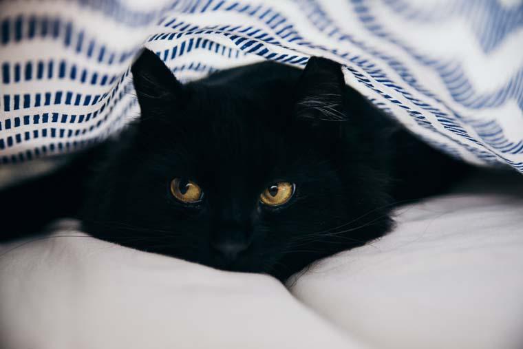 横目でこちらを見ている黒い猫