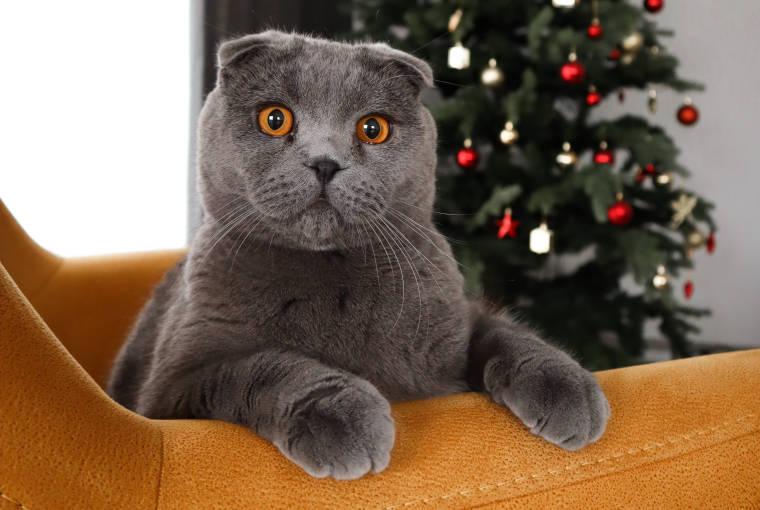 ソファーからこちらを見ている灰色の猫