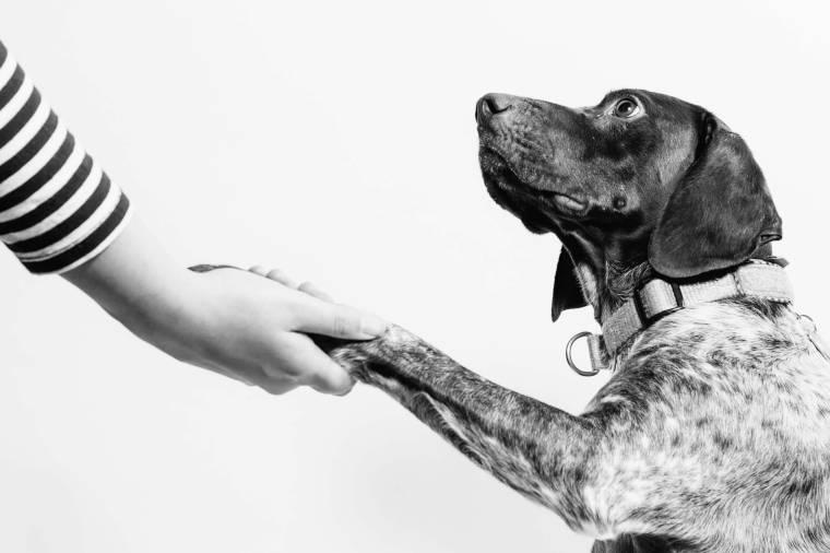 犬の手を握る飼い主