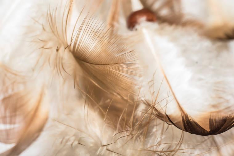 空から舞い落ちる羽