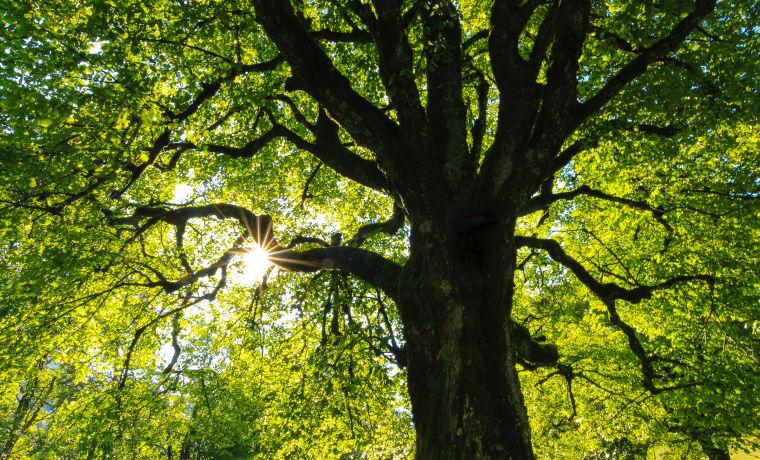 木の下から木漏れ日が差す画像