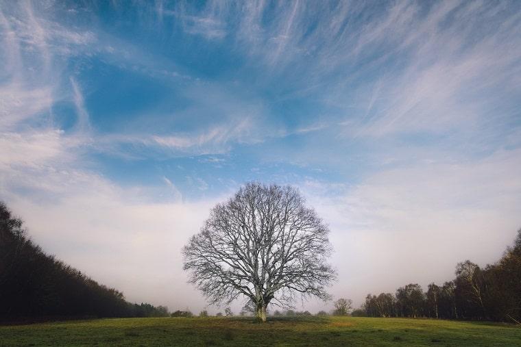 野原に立っている一本の木